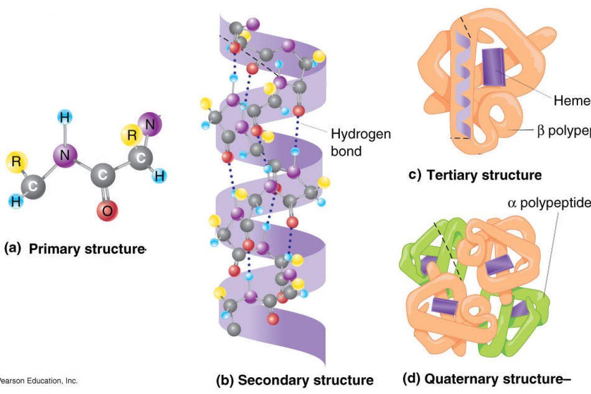 Mengenal Rekayasa Protein