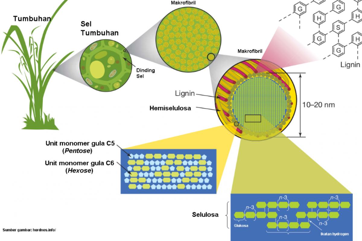 Produksi Energi Dari Biomassa (Bag. 1) : Mengenal Biomassa