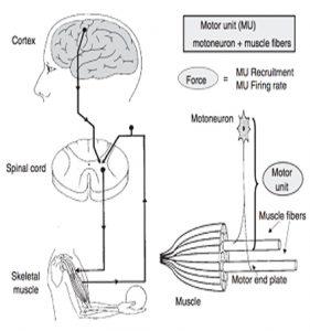 elektromiografi